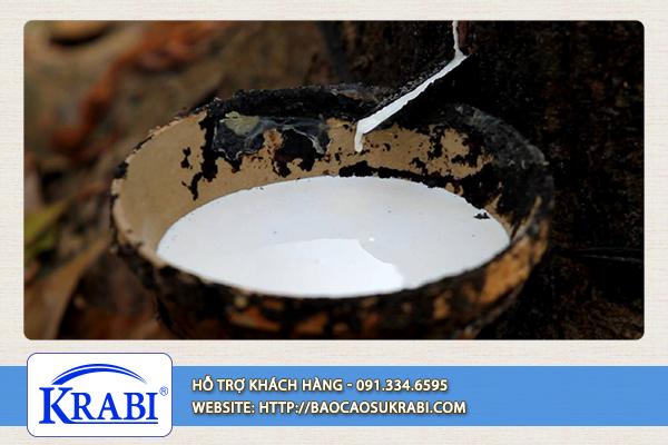 Bao cao su tự nhiên Krabi được sản xuất từ mủ cao su chất lượng cao.